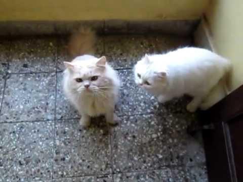 CAT TRAINING :-EXERCISING YOUR PET CATS .