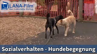 Sozialverhalten in der Hundebegegnung - HundeTeamSchule