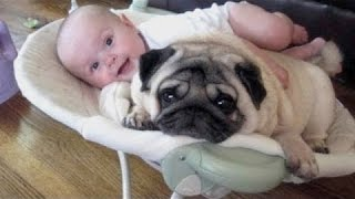 Śmieszne Psy Zazdrosny O Dzieci - Cute Dog