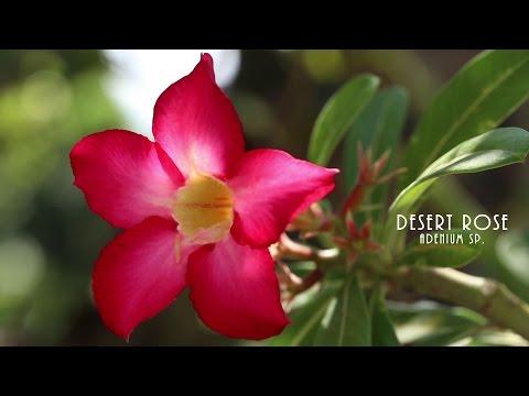 Tropical Flowers - Take Two HD