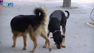 Будем убивать собак? Проблема бродячих животных в Южной Осетии