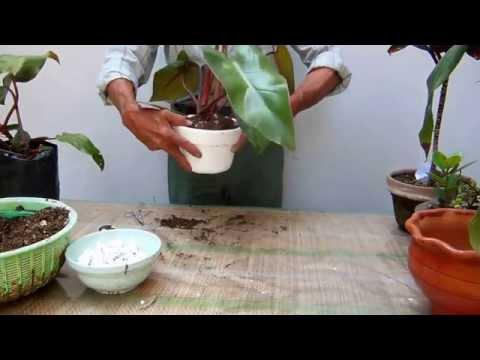 El jardinero en casa dr cenas doovi for Jardinero en casa