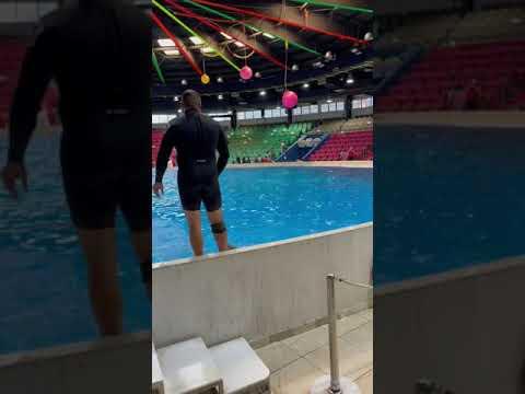 Dolphin show 2021 at Dubai Dolphinarium