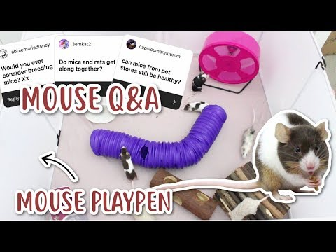MOUSE PLAYPEN & ANSWERING YOUR MOUSE QUESTIONS