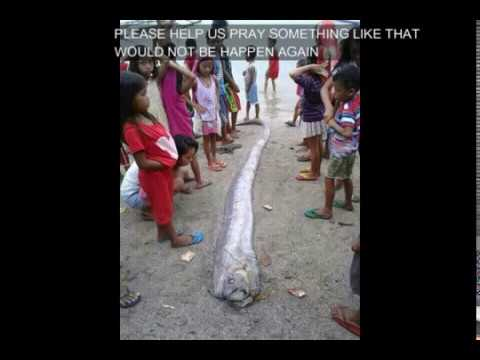 OARFISH FOUND DEAD IN PANGLAO,BOHOL