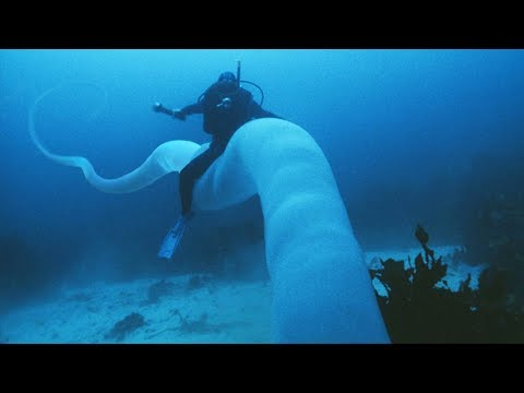 The Ocean's CREEPIEST Underwater Secrets!