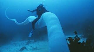 The Ocean's CREEPIEST Underwater Secrets!