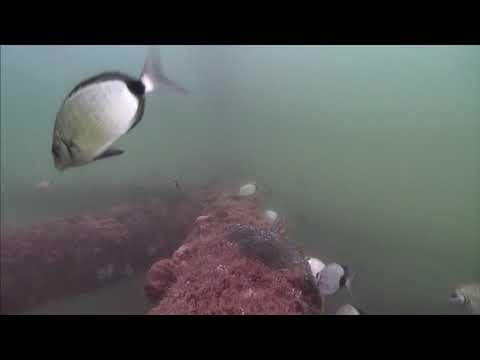 Sharks in the Atlantic Cam 05-18-2017 10:00:16 - 10:59:59