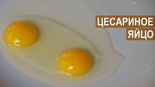 Профессор Забиякин. Цесариное яйцо и онлайн школа цесарководства. Нужна ли такая школа?
