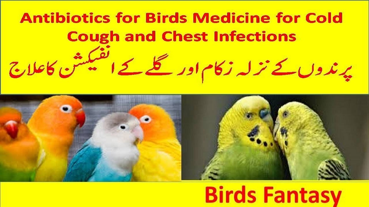 Antibiotics for birds| Birds Medicines for Cold Chest and Eye infections