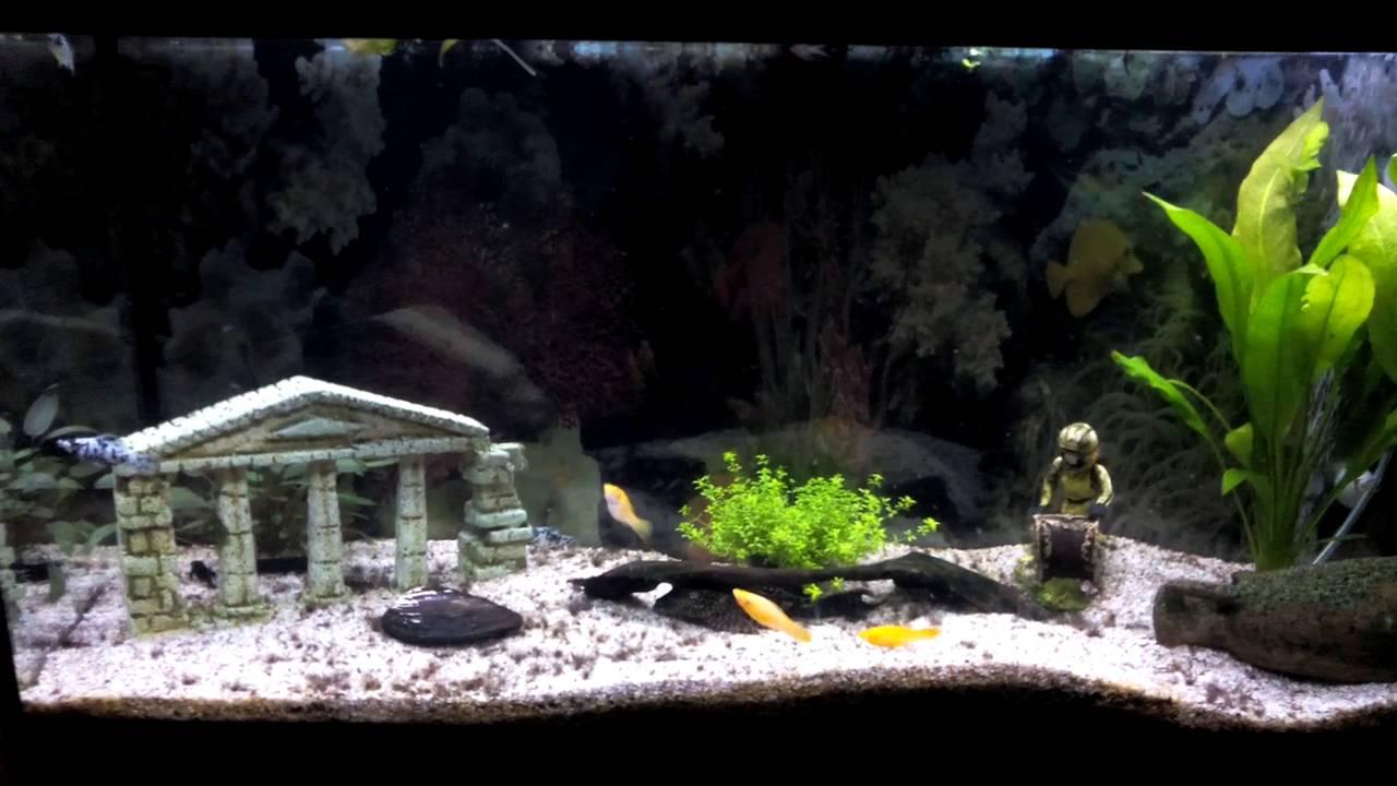 grand aquarium poissons d 39 eau chaude youtube. Black Bedroom Furniture Sets. Home Design Ideas