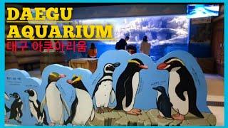 Daegu Aquarium,Part 2    대구 아쿠…