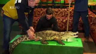 Прогулка по крокодиловой ферме в Екатеринбурге