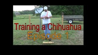 Training The Chihuahua Dog-sit-come-stay,episode 1