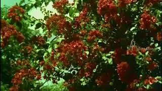 Thayil Sirantha kovilum illai