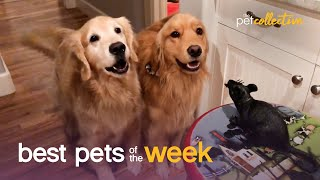 Curious Doggo Duo | Best Pets of the Week