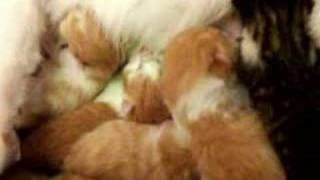 surprise new born kitties one day old