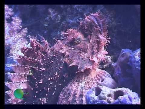 Diving Spratly Islands