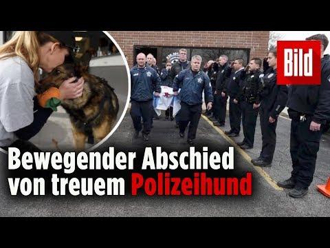 Die Kollegen von Polizeihund Brix begleiten ihn auf seinem letzten Gang