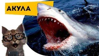 Наука для детей Животные | Акулы | Семен Ученый