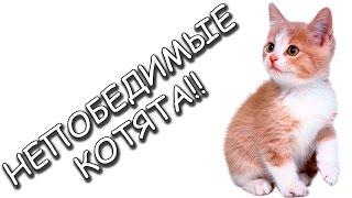 НЕПОБЕДИМЫЕ КОТЯТА - Strikeforce Kitty: Last Stand