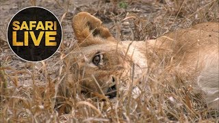 safariLIVE: The Gauntlet - Episode 4 - August 18, 2018