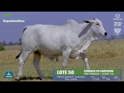 LOTE 50 - Leilão Genética Aditiva ExpoGenética 2019