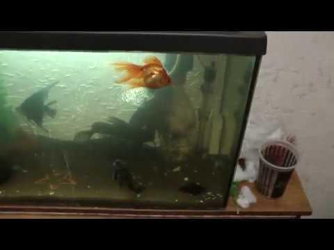 Бесшумная аэрация аквариума через внутренний фильтр (2а способа )
