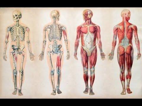 AUZEF 19 01 2019 Anatomi Final Soru ve Cevapları