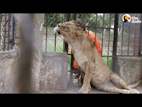 Animals Left To STARVE At Zoo Experience Love for the First Time | The Dodo