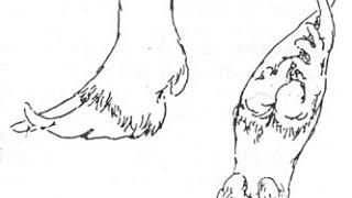 Как правильно постричь копыта козе.(Постригаем копыта козе., 2016-03-16T13:18:16.000Z)