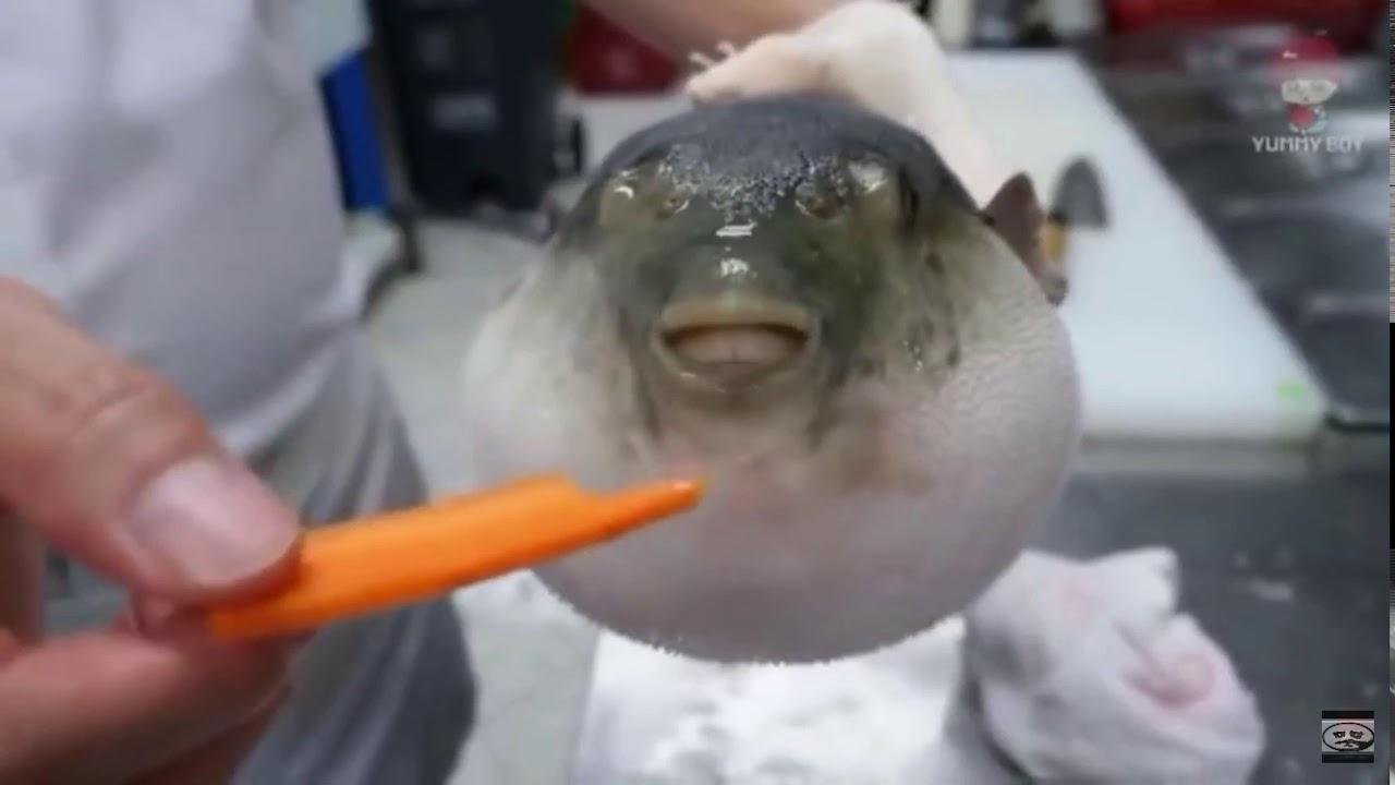 Puffer fish meme short version - YouTube