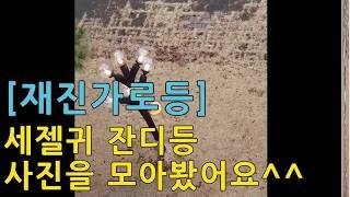 [재진가로등] 세젤귀 잔디등 사진을 모아봤어요^^