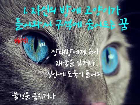 고양이 꿈해몽 꿈해석 꿈풀이 3가지