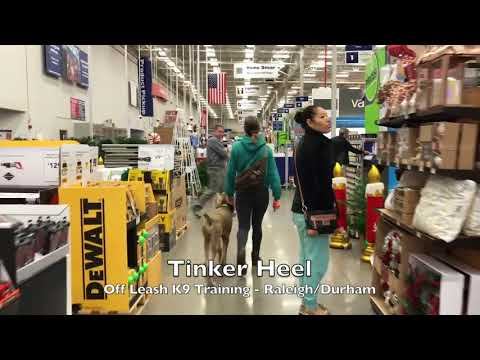 7mo Giant Schnauzer/Poodle Mix Before and After - Raleigh Durham Dog Training
