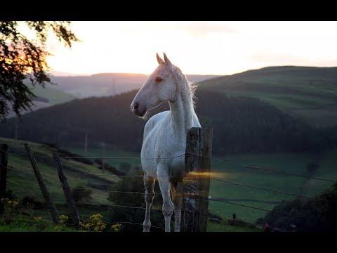 МОТИВАЦИЯ - Конный Спорт/MOTIVATION - Equestrian Sport