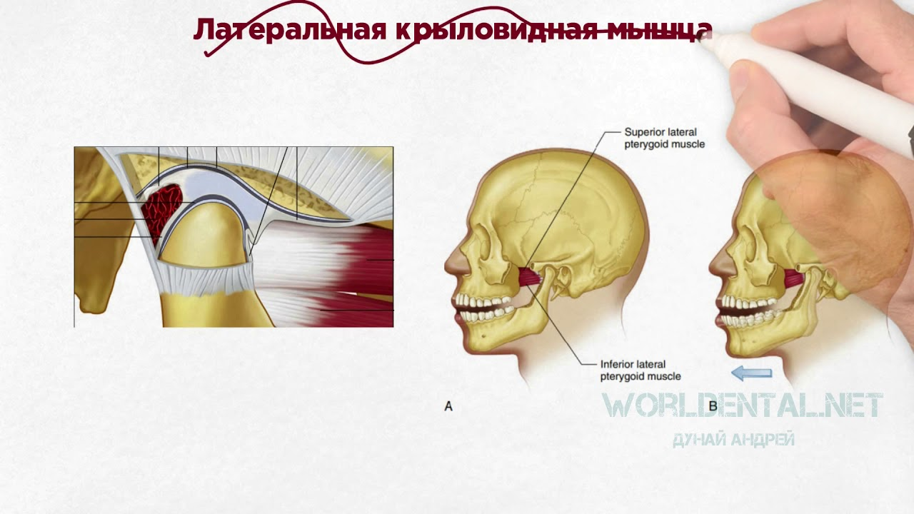 Функциональная анатомия височно-нижнечелюстного сустава - страница 23 увеличению подвижности суставов нижней конечности для ребенка с параплегией