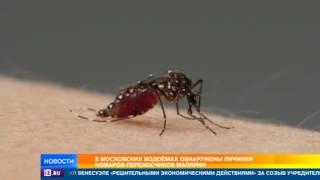 Роспотребнадзор обнаружил в водоемах Москвы личинки комаров переносчиков малярии