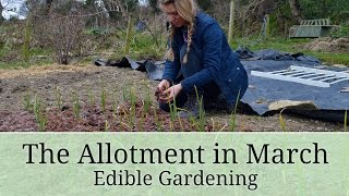 Lovely Greens Allotment Garden Update - March 2016 - Vlog #1