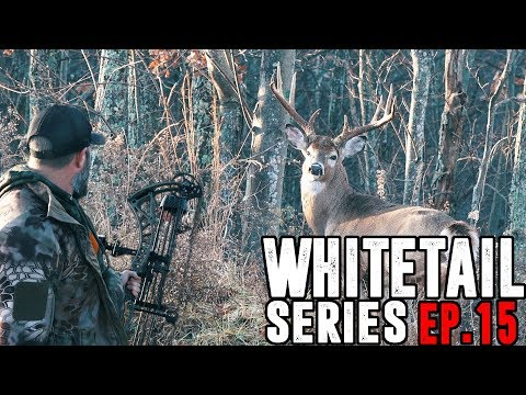 THE LUCKIEST SHOT EVER? - Bowhunting From The Ground.