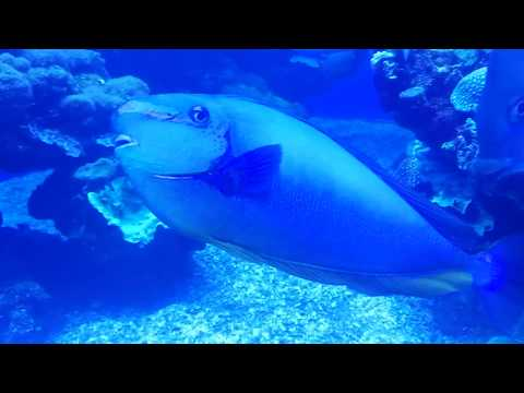 Marine World In Palma Aquarium, Mallorca, Spain || StayAway