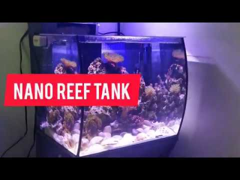 new-!!-nano-reef-soft-corals-and-inhabitants-low-tech!