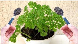 1 Colher Faz Crescer Qualquer Planta