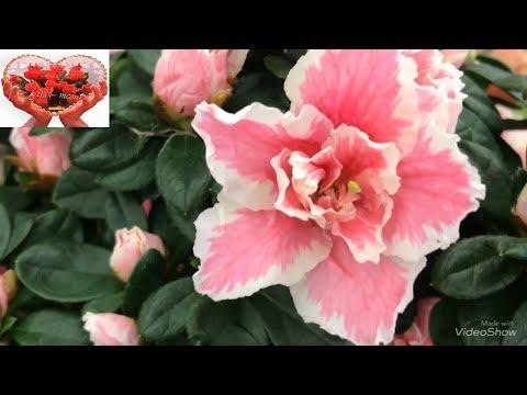 Цветы к Дню Влюбленных в Бауцентре.
