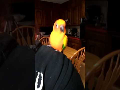 Parrot Dancing to Lady GaGa