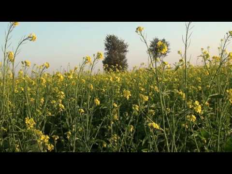 baith unth pe video song  with beautiful video background
