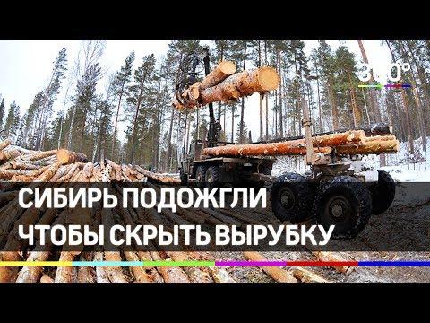 Пожар в лесах Сибири скрывал незаконную вырубку