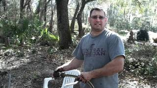 Collecting Bald Cypress  for bonsai part...