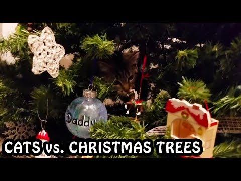 Cats vs. Christmas Trees 2018 - 2019