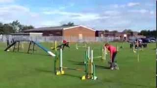 Wilton Agility Northern Schnauzer Club Small Team
